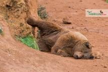 brown bear nap 3